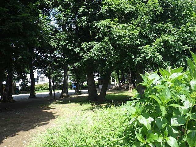 自然あふれるすぐ近くの公園