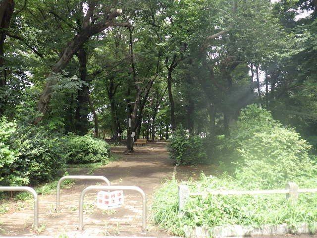 緑の木々の繁る自然豊かな公園