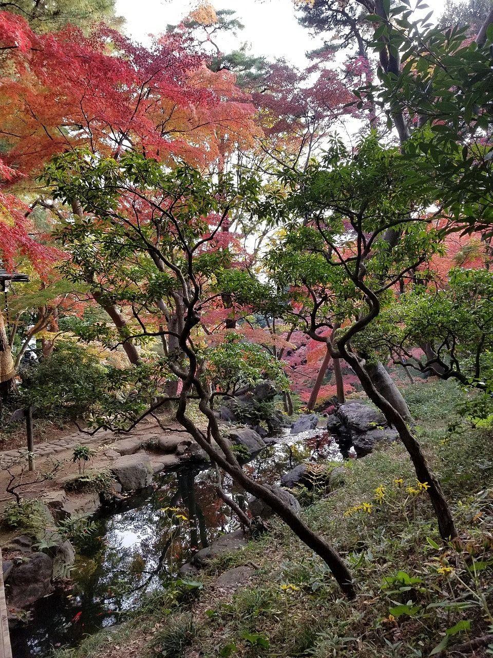 崖から流れ落ちる湧水と木々