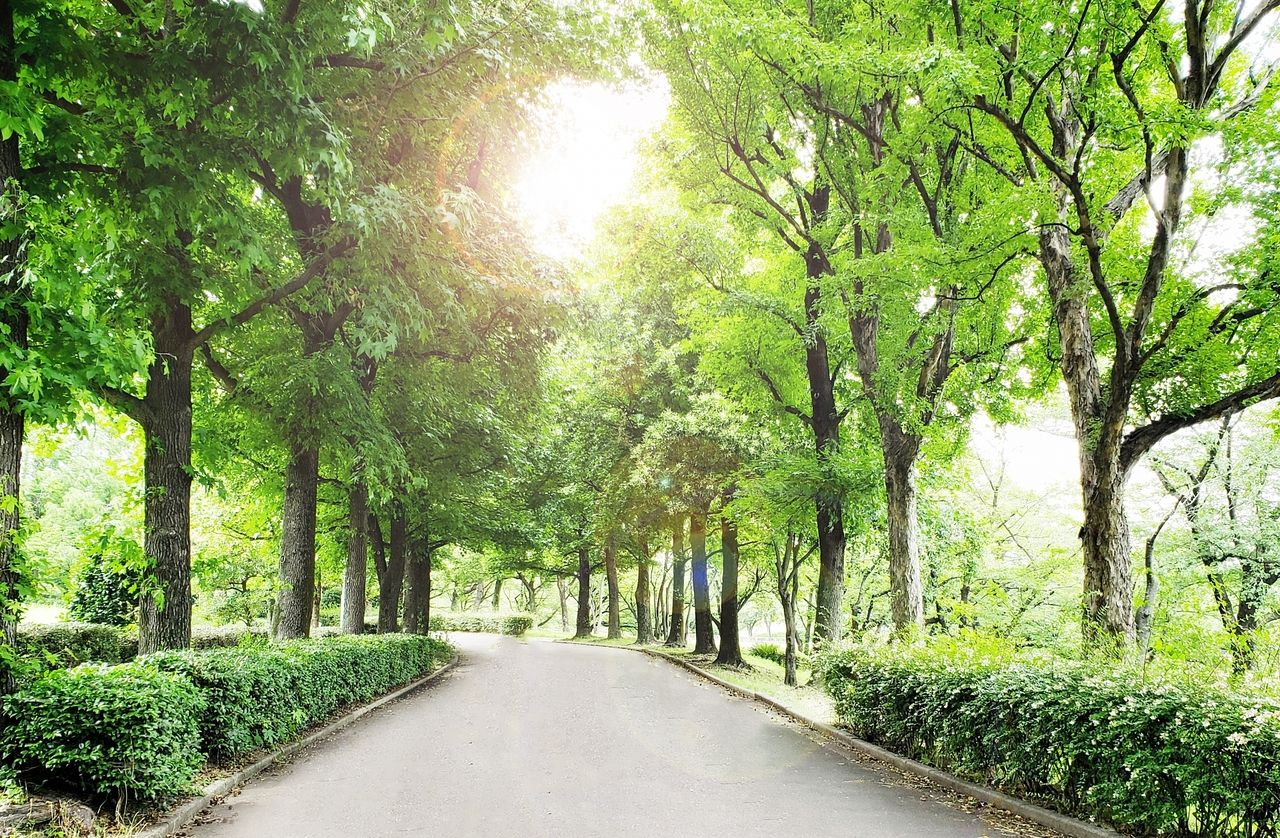 木漏れ日の中を歩く散歩道