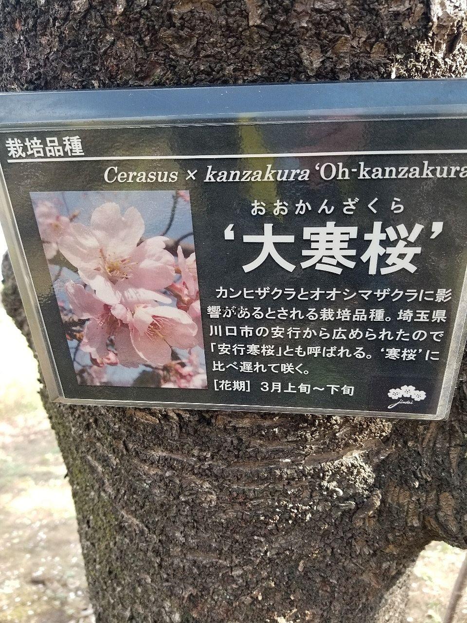 園内の花にはほぼ説明のプレートがあります。