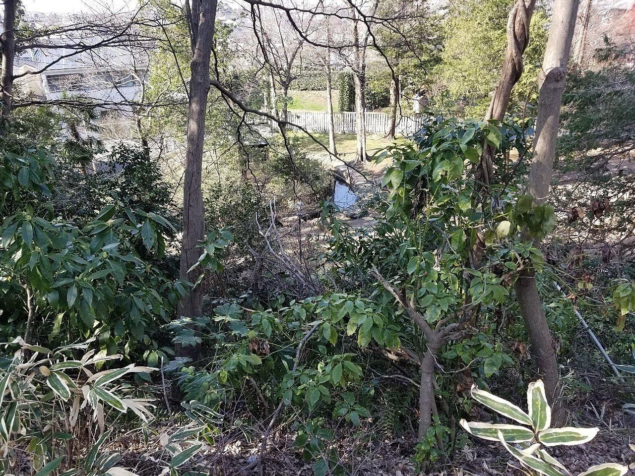 神社は丘陵地の上にあるので、武蔵野の緑を残す崖があります。