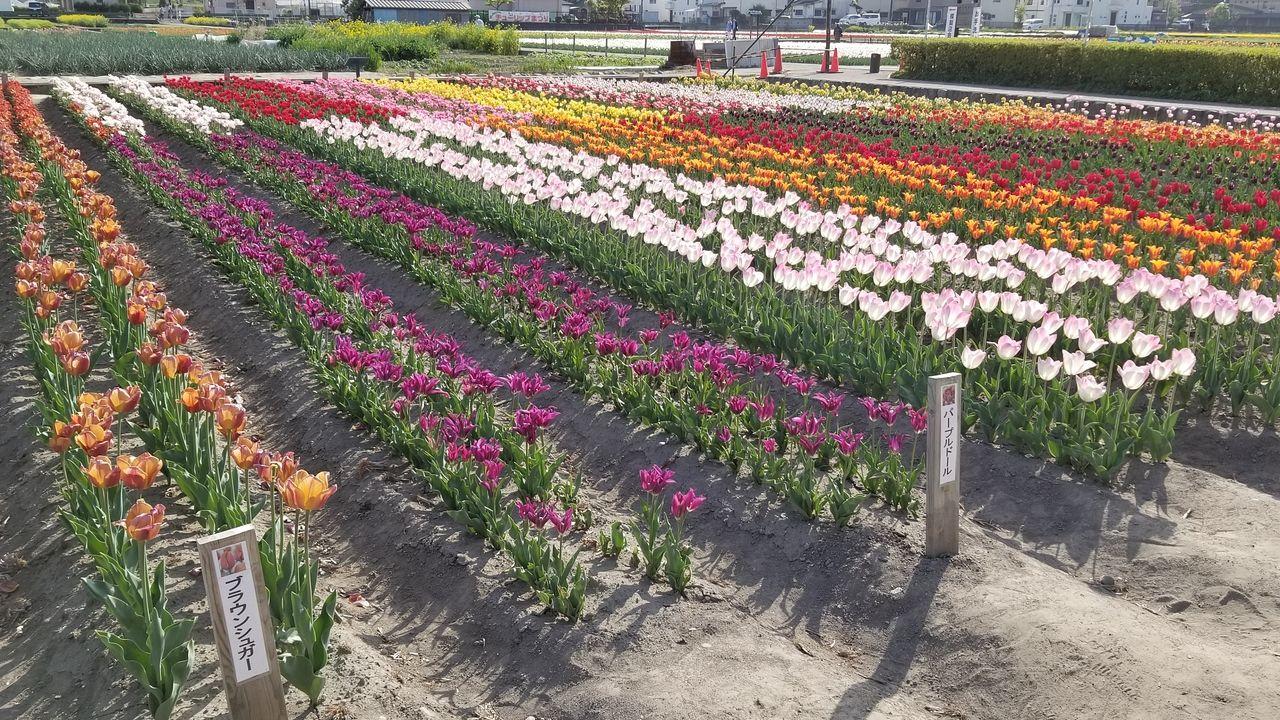 色彩鮮やかな花