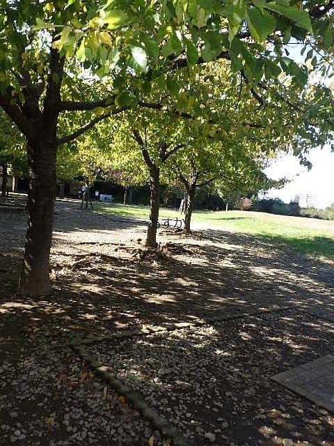 いこいの森公園のバーベキュー広場
