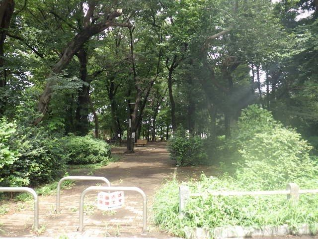 大きな木のある自然な公園