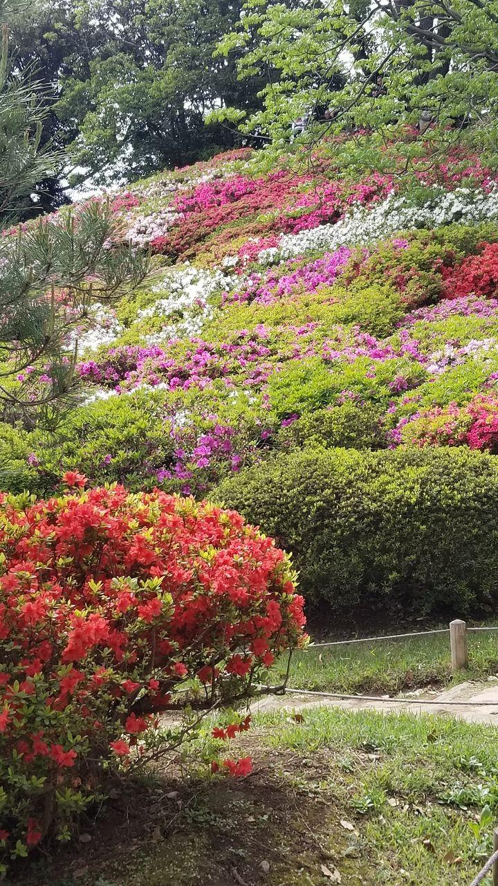 傾斜地なので見事に一面の花の様子が見られます