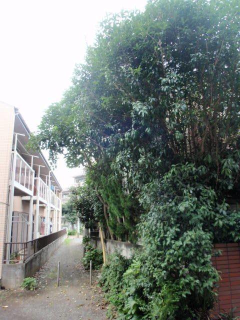 家も見えないほどの繁った木