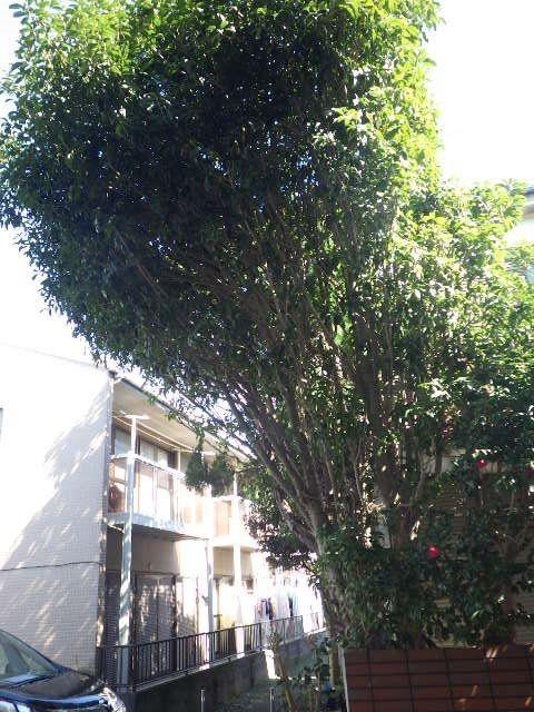 隣のアパートの通路からは大きくかぶさる木が見えます。