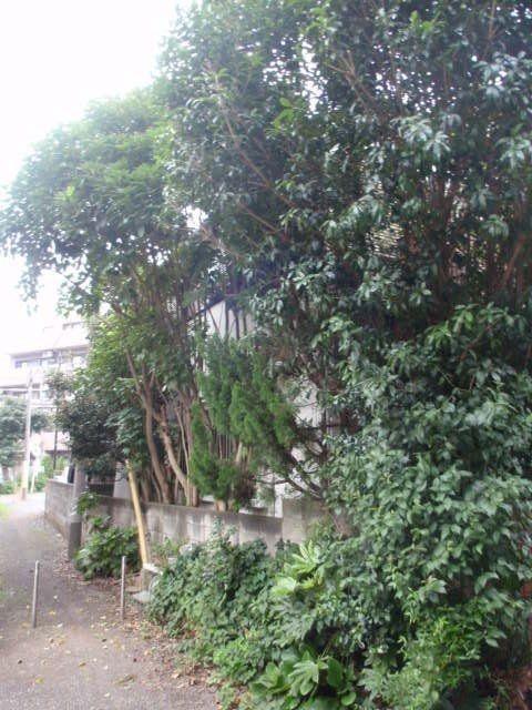 塀を超えて繁る木々