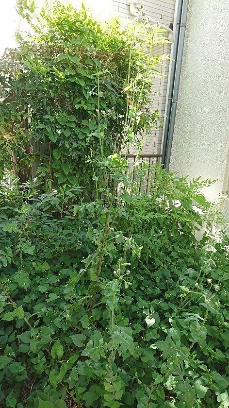 車の奥は隣地まで雑草がビッシリ