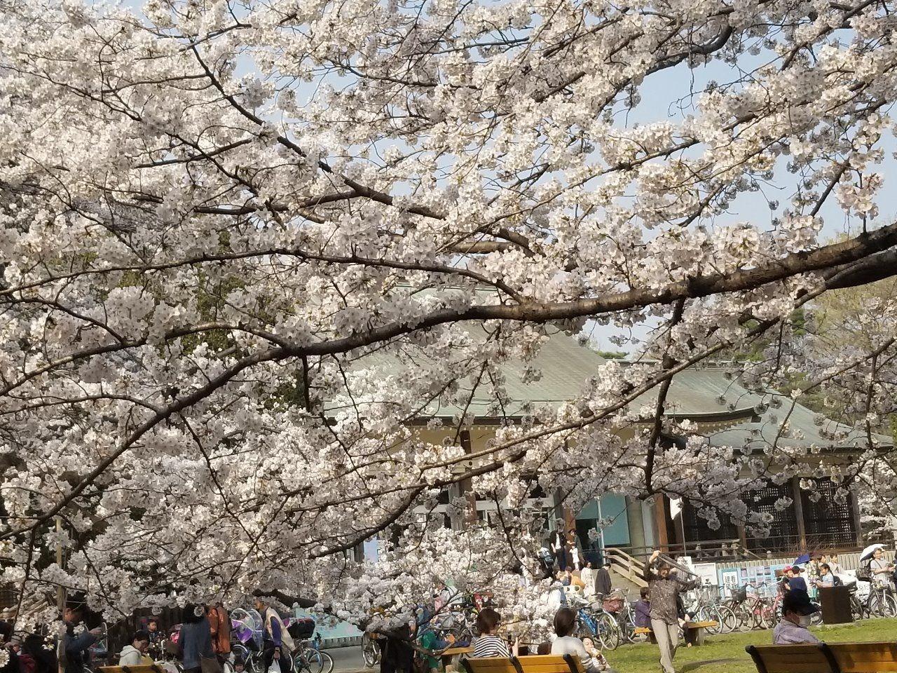 桜の園正面にある建物園。歴史ある建物の内部まで見ることができます。