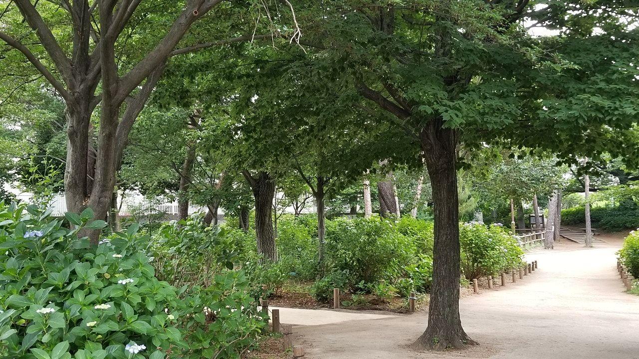 武蔵野の雑木林が残されています。