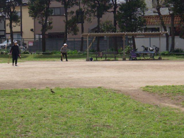 ゲートボールを楽しむ方
