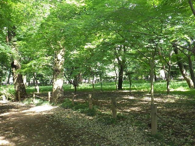 手塚治虫の愛した平林寺の境内林