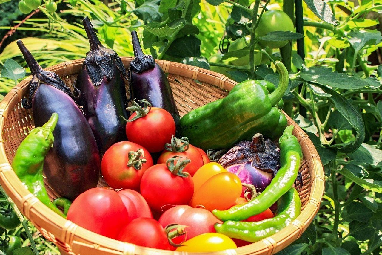 ひばり北口にオープン予定、生鮮食品の【野菜の力】