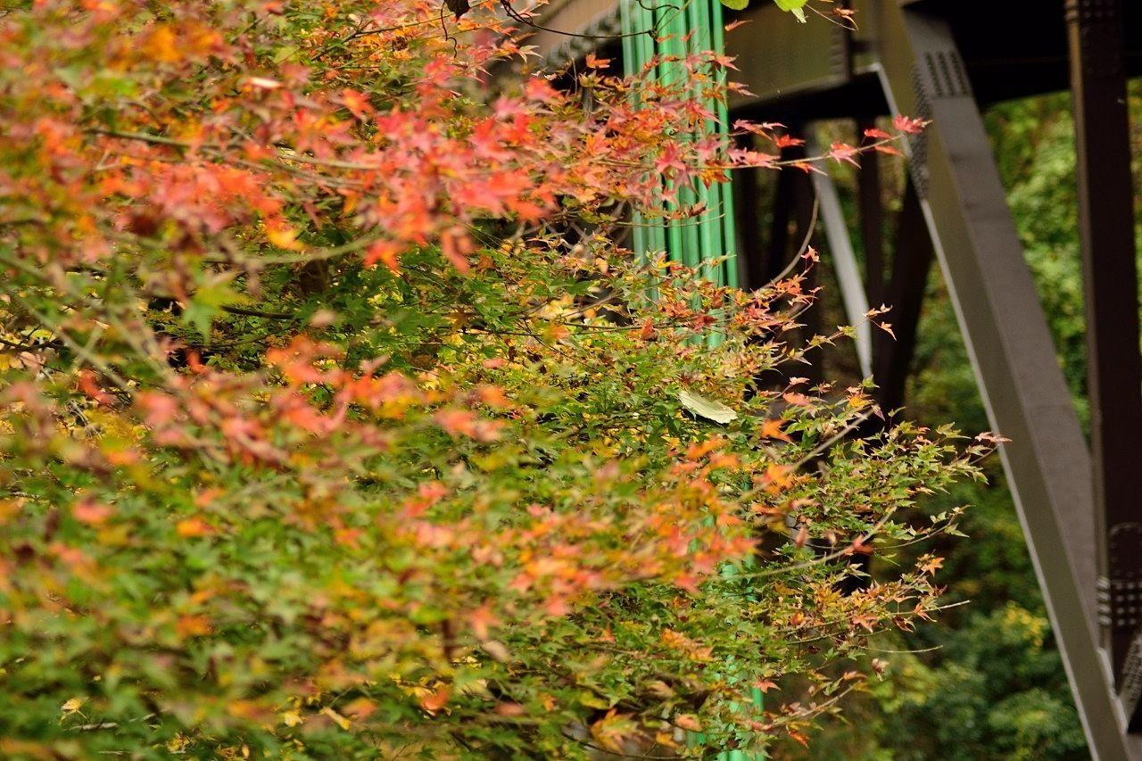 美しい紅葉のシーズン