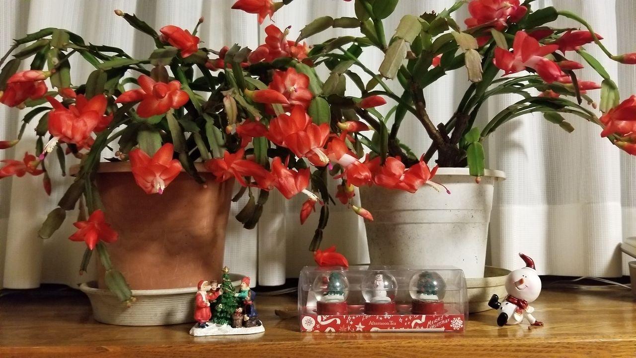 12月です。クリスマスとカレンダー。当社の師走の様子です。