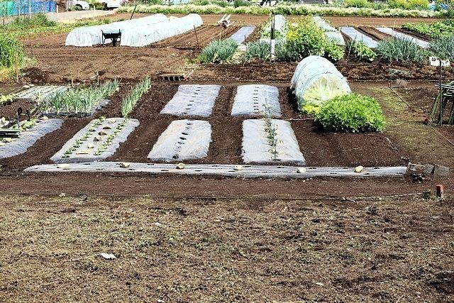 様々な野菜の植わった市民農園
