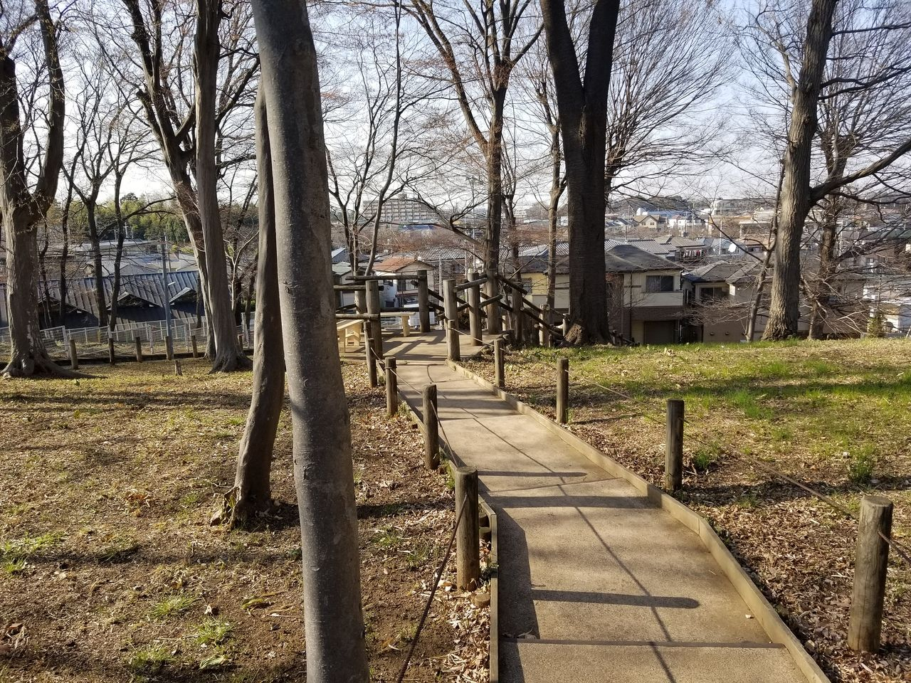 保全緑地内の遊歩道