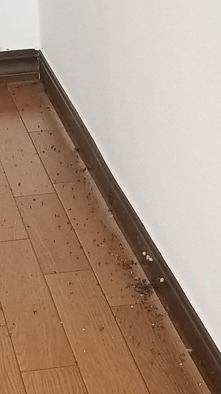 部屋一面に広がる虫の死骸