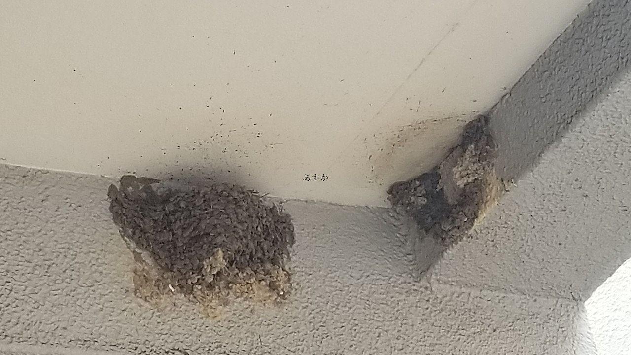 今年も軒先にツバメが巣をつくりました。