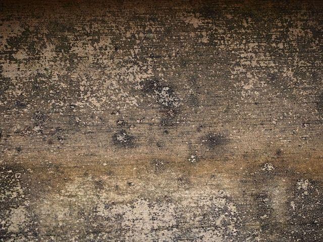 カビで黒くなった壁
