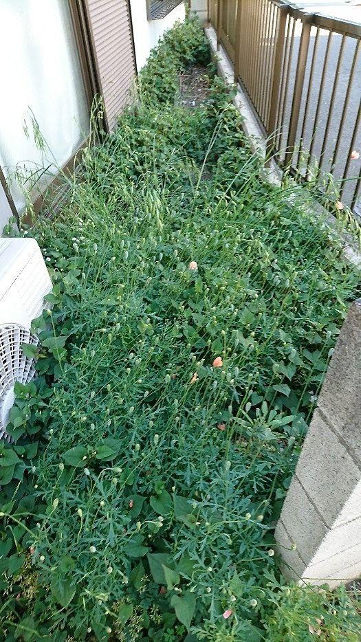 1階の庭に生い茂る雑草