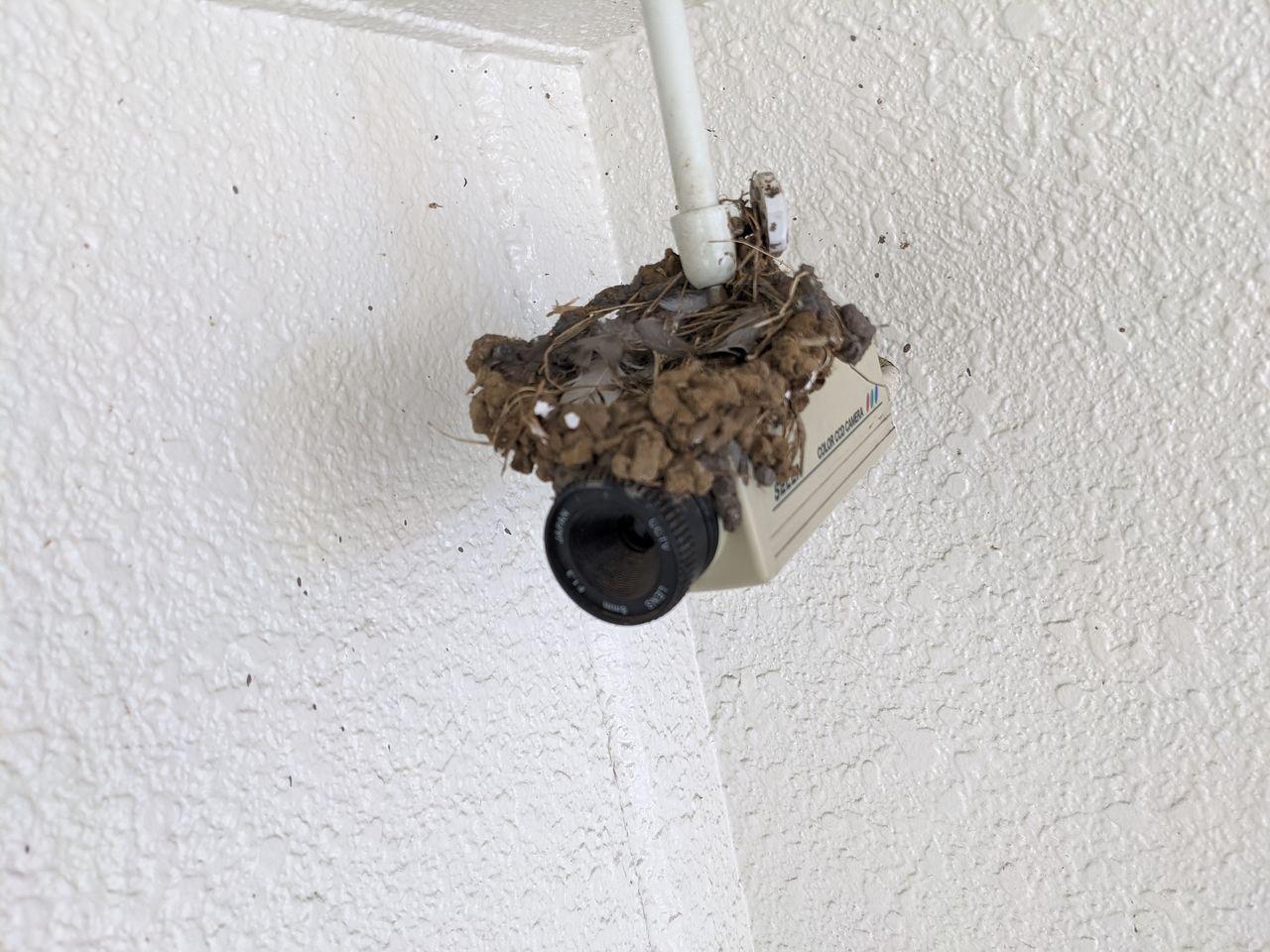 巣の中に大きな鳥の羽が残る