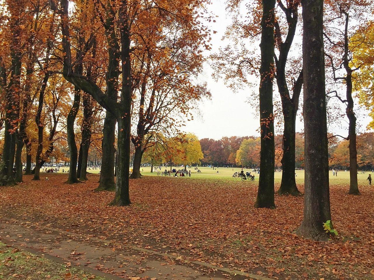 小金井公園で開催中 全国ご当地旅するフェア