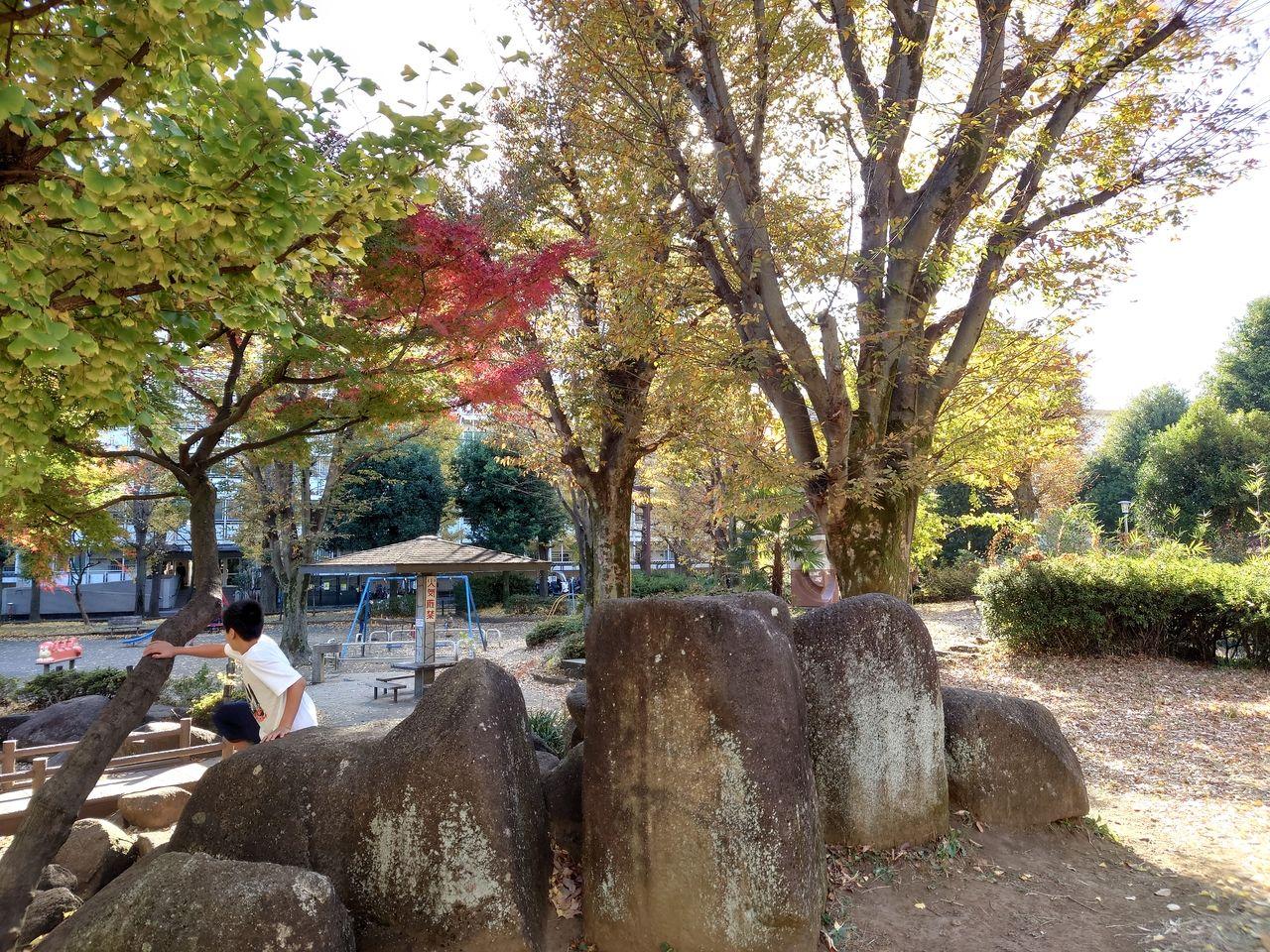 子供の遊ぶ公園内の池