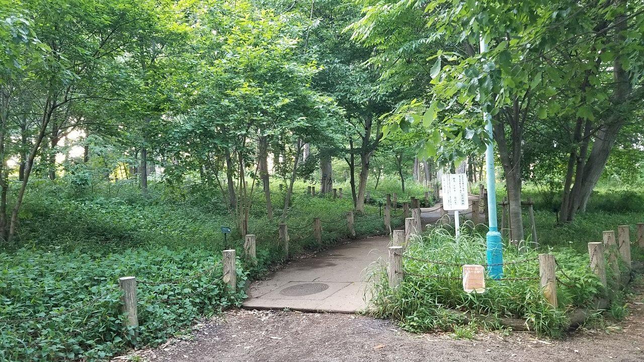 自然のままの公園