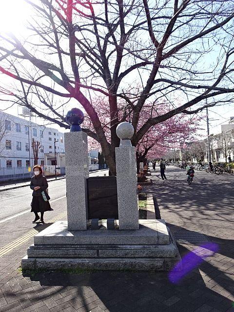 公園の看板から桜が見えます