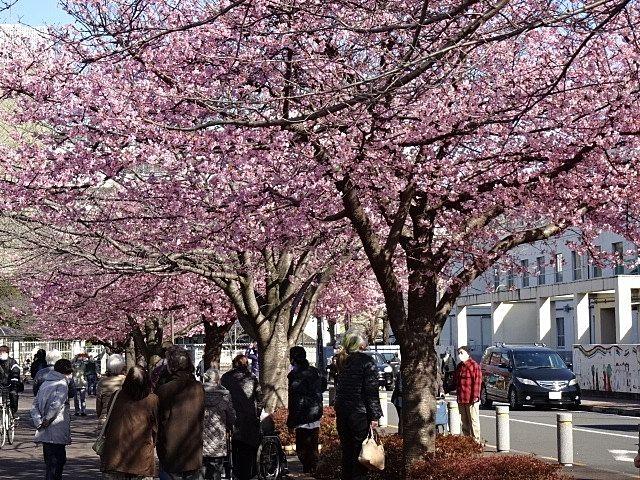 春の陽射しの中満開の桜・いこいの森公園
