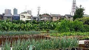 住宅街の中の農地