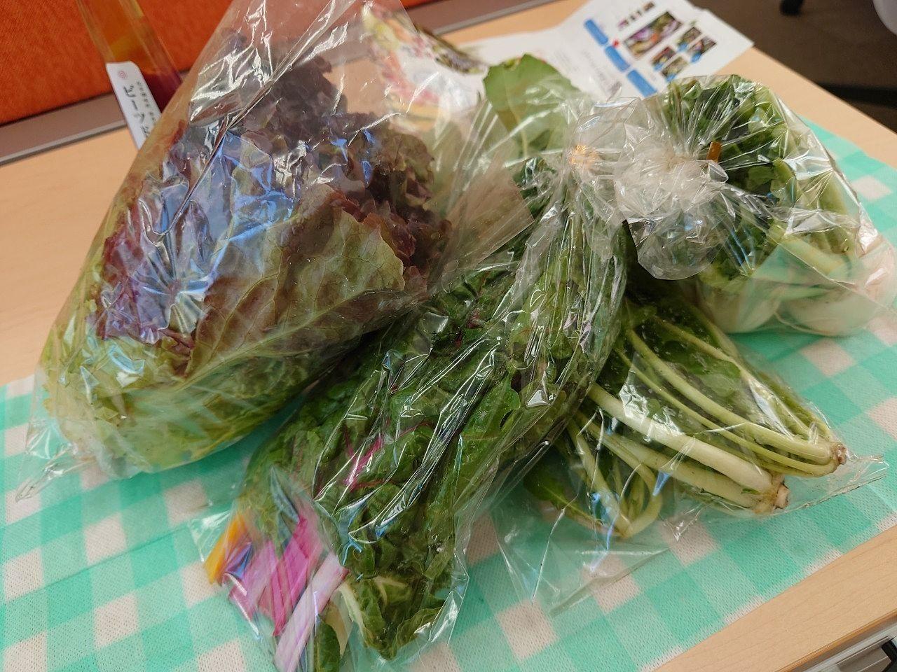 西東京市家族で営むこだわりの野菜農家【やすだ農園】