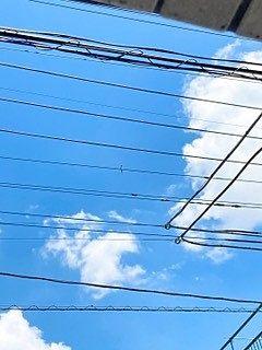 電線に数羽止まっています