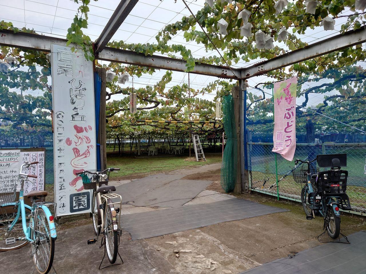 自転車置場と駐車場有