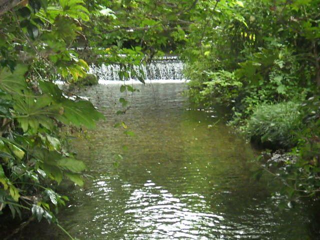 南沢緑地保全地域の湧水