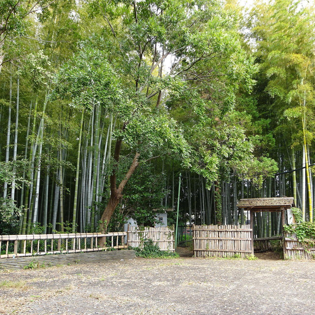入口から広がる竹林の様子