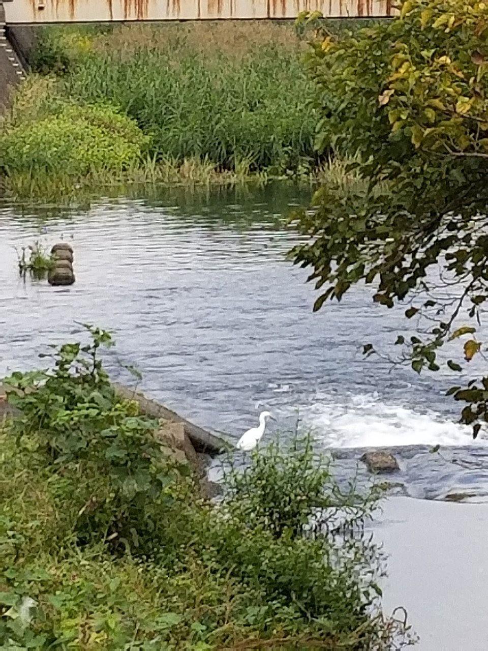 出てすぐの落合川、サギが止まっている