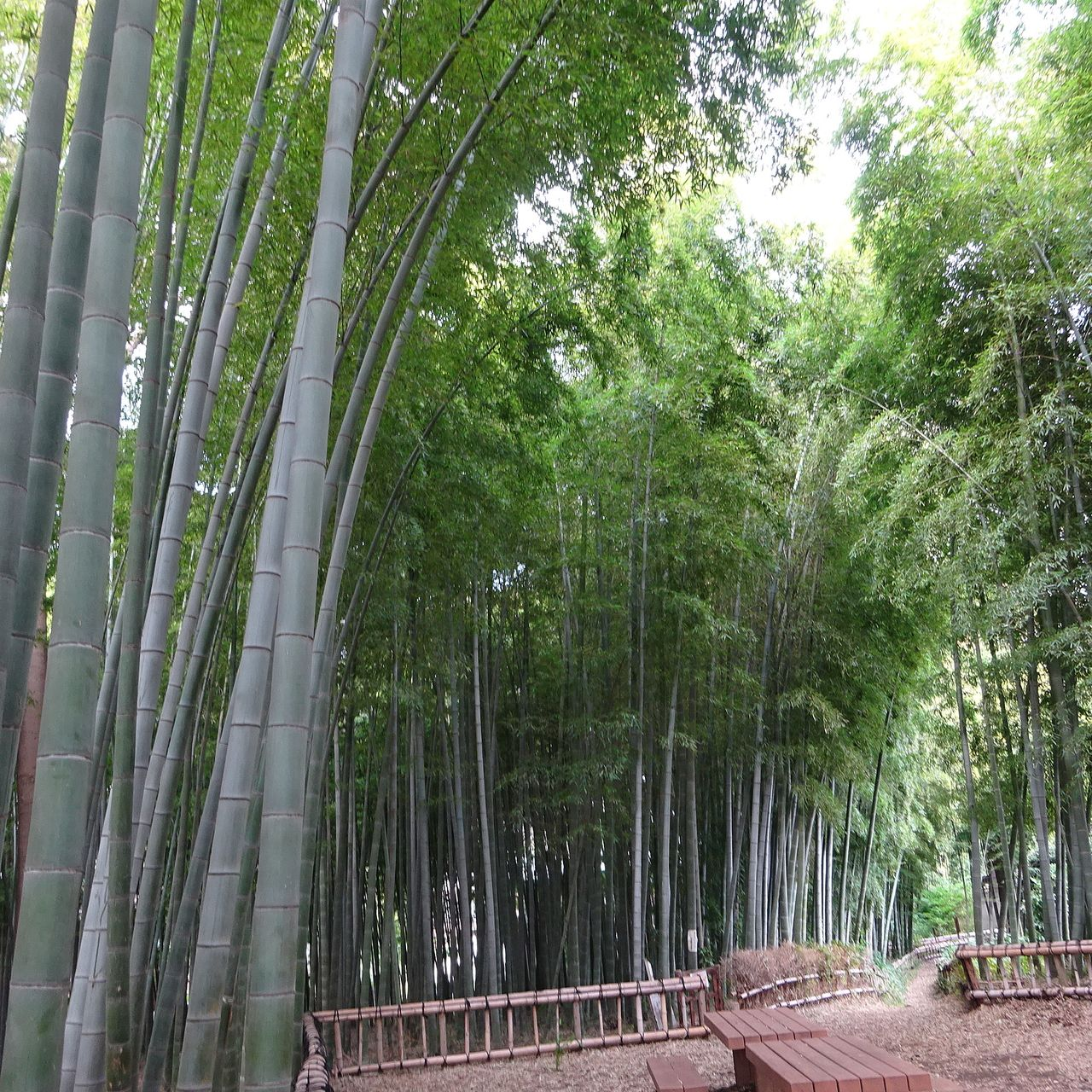 圧倒される竹の様子