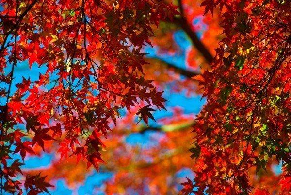 紅葉のきれいな場所へもいけます
